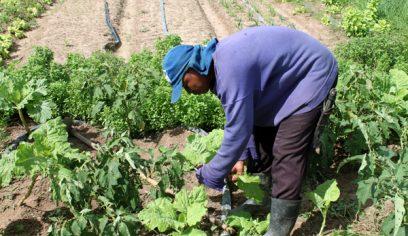 Sedap convoca associações para pré-cadastramento de agricultores