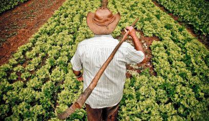 Cerca de 70 agricultores receberão certificação de produção orgânica