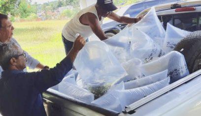 Sedap inicia doação de filhotes de peixes para piscicultores do município