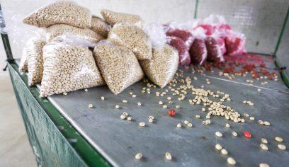 Prefeitura inicia distribuição de 2.500 kg de sementes para agricultores