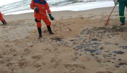 Praia de Jacuípe recebe mutirão de limpeza para remoção de manchas de óleo