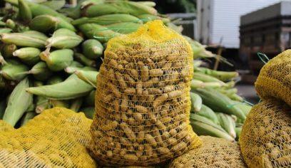 Prefeitura comprará 10 toneladas de produtos agrícolas típicos do período junino