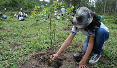 Sedur lança Festival da Sustentabilidade na próxima terça (1°/6)